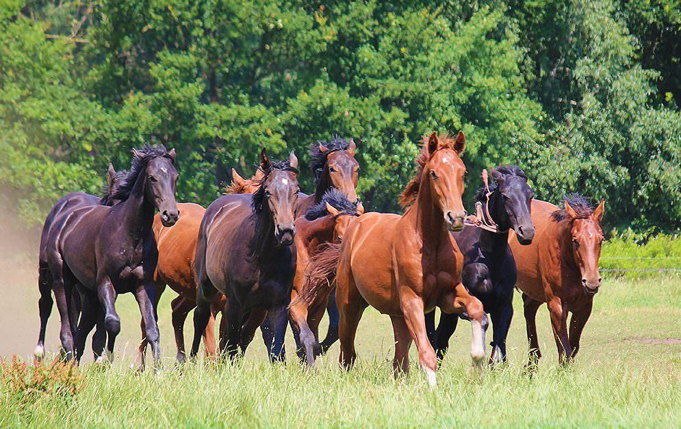 Eigentlich ist ja schon immer der Mensch für die Miseren verantwortlich, die mit dem Pferd passieren. Aber manchmal, da sind Pferde auch frech und machen wissentlich etwas, das sie normalerweise nicht dürfen.