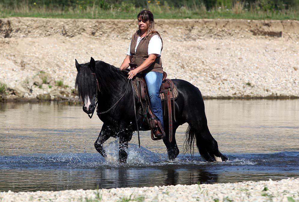 Header Pferd Hitze