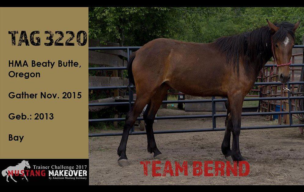 Bernd Hackl ist einer der wenigen Horseman, die sich ganz dem Horsemanship verschrieben haben.