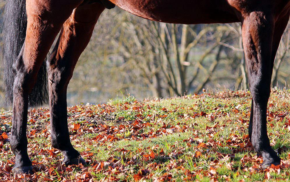 Der Herbst ist da und die Bäume verlieren ihr Blattwerk - doch wie geht man mit dem Laub und den Baumfrüchten um? Sind diese als Pferdefutter unbedenklich oder sollte hier Vorsicht gewahrt werden?