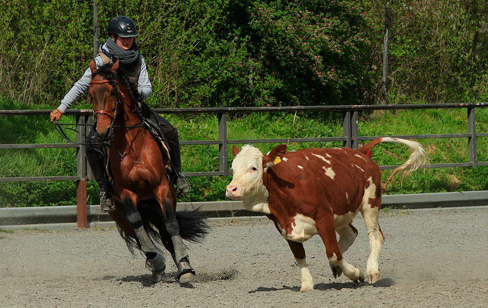 Wie man ein Rind gekonnt aus der Herde und gemeinsam mit deinen Helfern in einen Corral treibt - das haben die Kursteilnehmer bei Thomas Türmer gelernt.