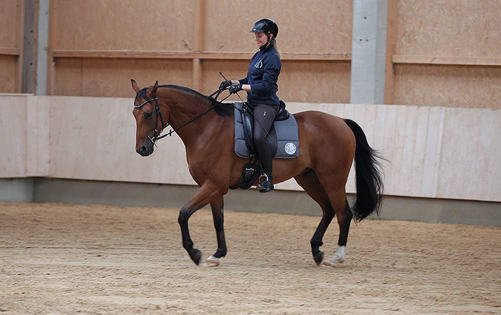 Das Knie wirkt sich auf den Reitersitz aus - auf gute oder schlechte Weise.