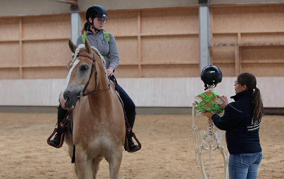Der Schultergürtel sitzt im Zentrum des Oberkörpers und leitet die Energie des Reiters auf das Pferdemaul um – und andersrum.