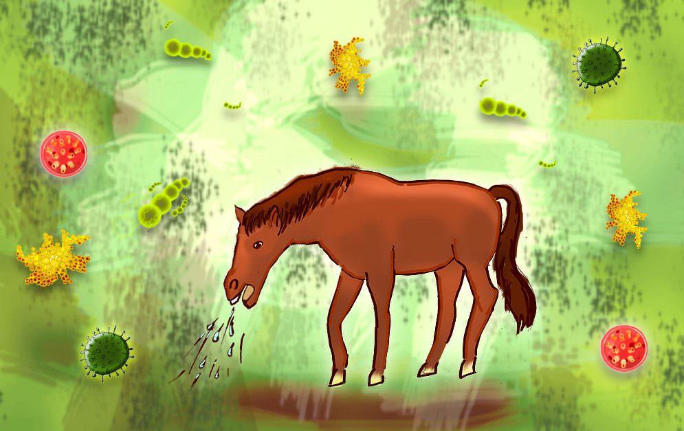 Bronchitis bei Pferden: Atemwegserkrankung