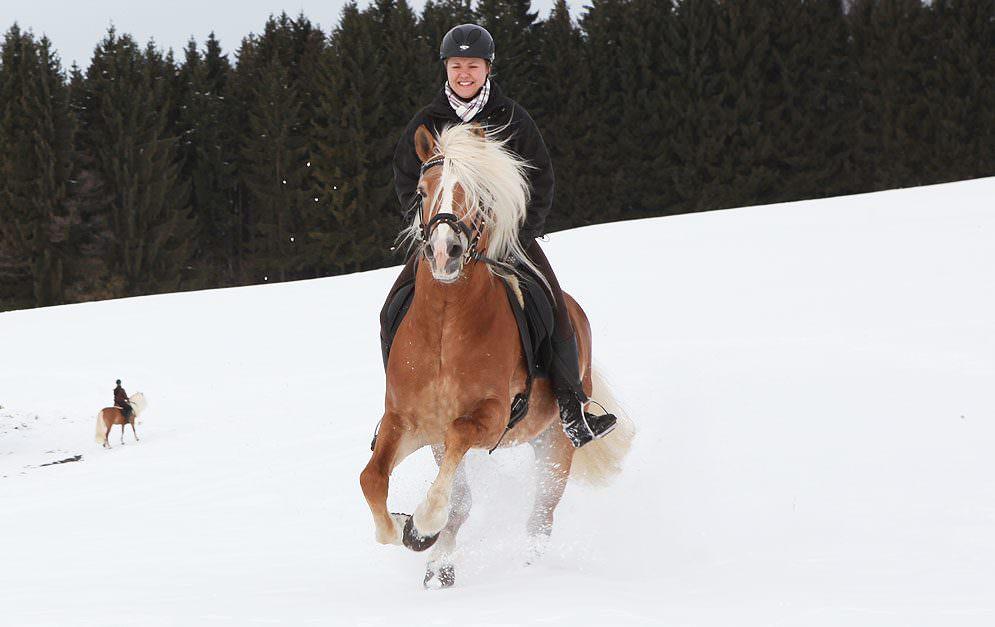 Pferde im Winter trainieren