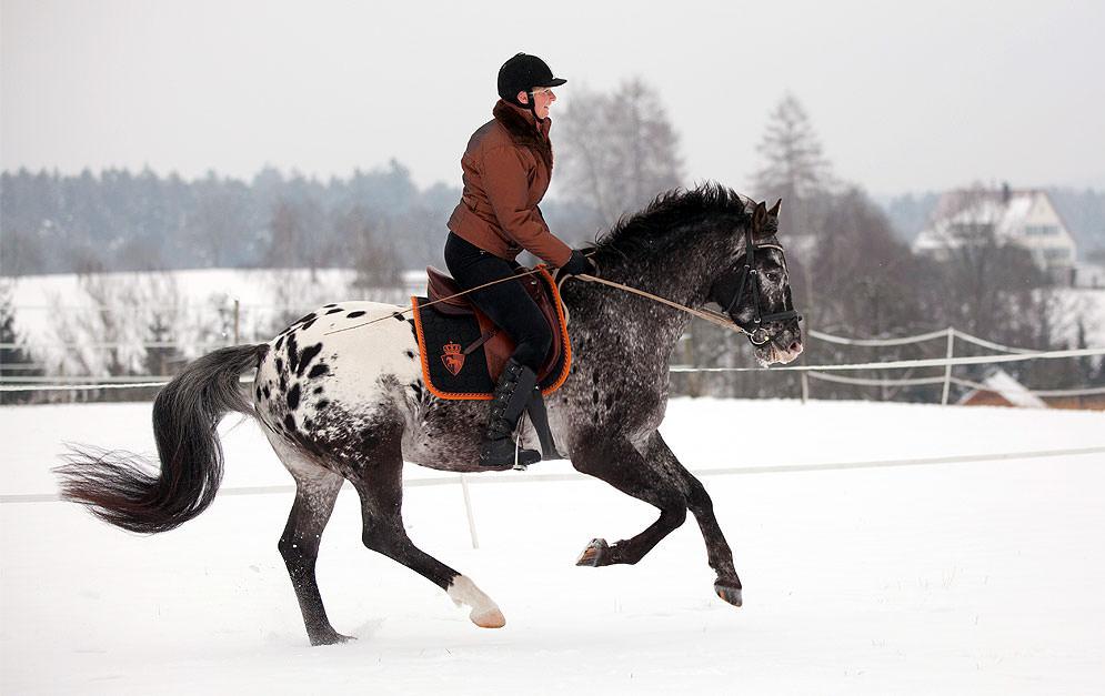 Wenn du auch im Winter für ein abwechslungsreiches Reittraining sorgen möchtest, haben wir das richtige für dich: ein Trab- und Galopptraining im Schnee.
