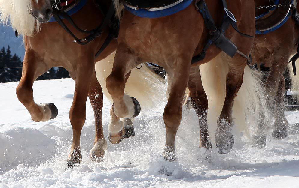 Header Winterwetter Pferdehuf