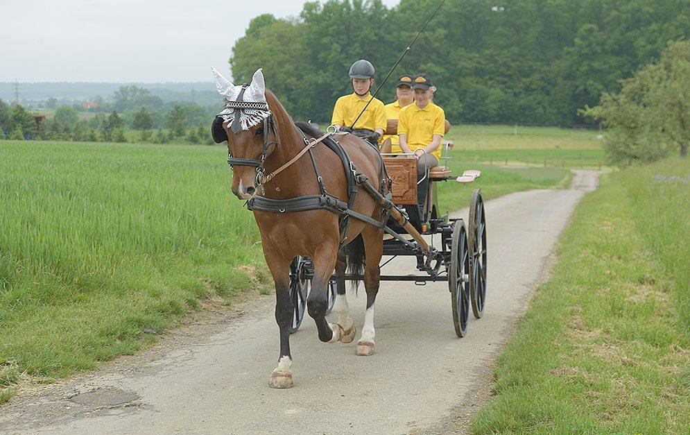 Die Gesellschaft zur Erhaltung alter und gefährdeter Haustierrassen (GEH) hat das Altwürttemberger Pferd zur gefährdeten Nutztierrasse des Jahres 2018 erklärt.