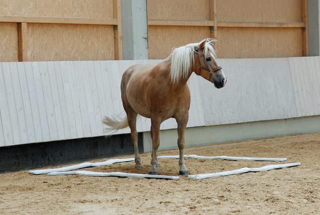 Der Equiplace ist ein Pausenraum für's Pferd.