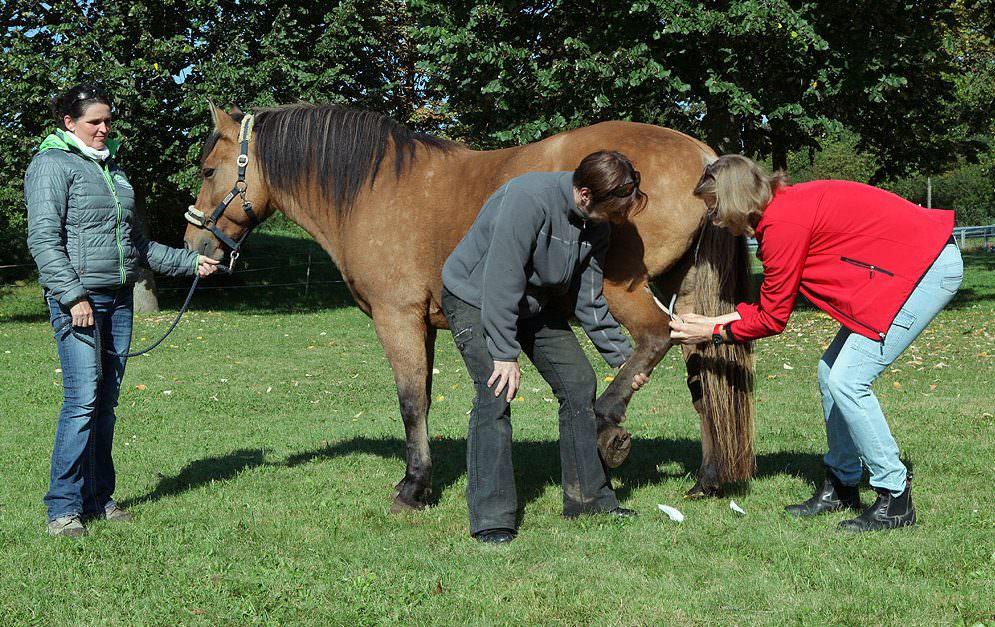 Kinesio Tapes bei Pferden.