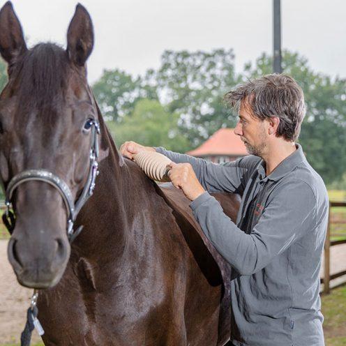 Mit einer Faszienrolle kannst du für mehr Flexibilität sorgen, wenn dein Pferd unter verklebten Faszien leidet.