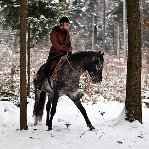 Dieses Training im Wald hilft die Balance- und Koordination von Pferden zu verbessern.