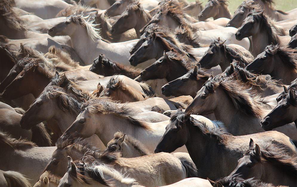 Nach der letzten Eiszeit sind fast alle großen Säugetierarten ausgestorben. Pferde nicht, wegen ihrer Fellfarbe.