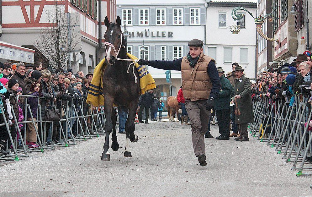 Seit über 300 Jahren wird in der baden-württembergischen Kleinstadt Leonberg nach alter Tradition Pferdehandel betrieben und Feste gefeiert.