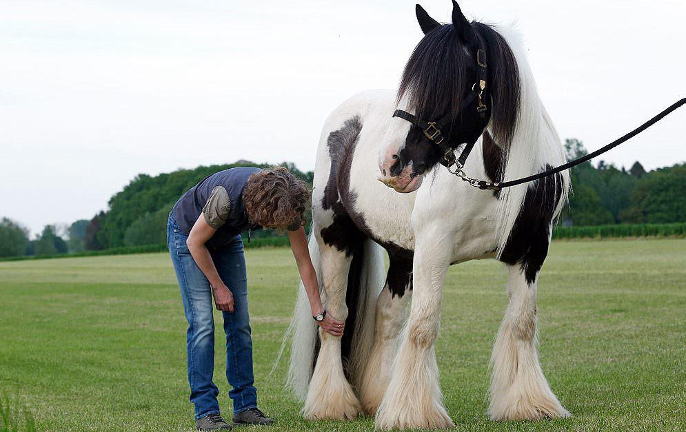 Arthrose beim Pferd © Biologische Heilmittel Heel