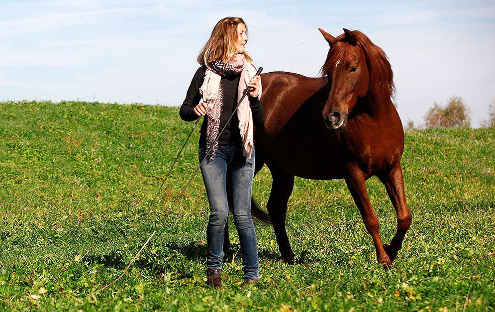 Bei der Freiheitsdressur lernt man viel über die Sprache der Pferde - und die Wirkung der eigenen Körpersprache.