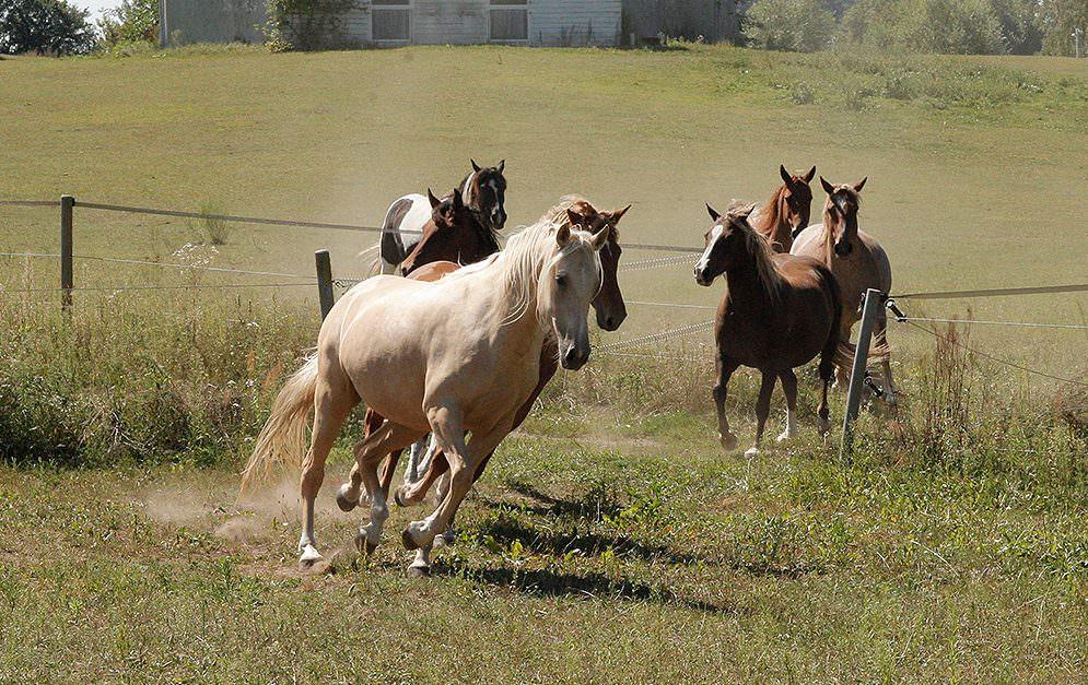 Michael Geitner ärgert sich - und zwar zu recht! Alle Pferde können Kompliment, aber die Basics, die sitzen bei vielen nicht.