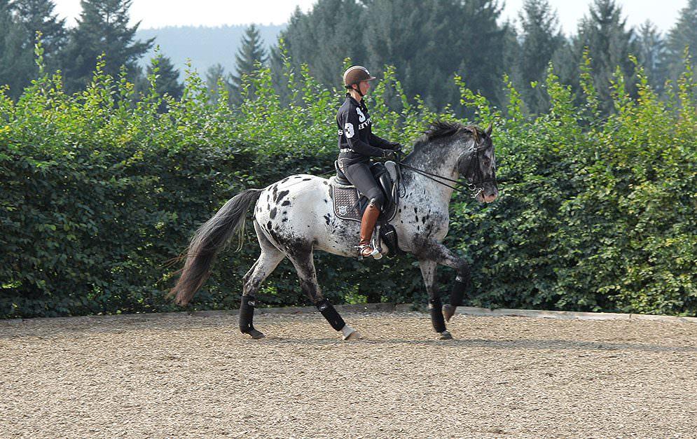 Punkt 1 der klassischen Ausbildungsskala. Der Takt ist der erste Punkt bei der Ausbildungsskala. Aber warum ausgerechnet der Takt? Könnte er nicht erst später in der Ausbildung berücksichtigt werden? Und wie erkennt man, ob ein Pferd im Takt läuft?