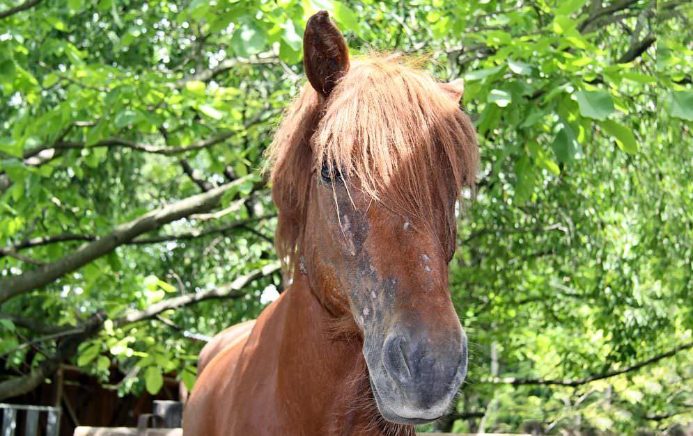 Verbesserter Impfstoff gegen Allergien bei Pferden und Hunden entwickelt