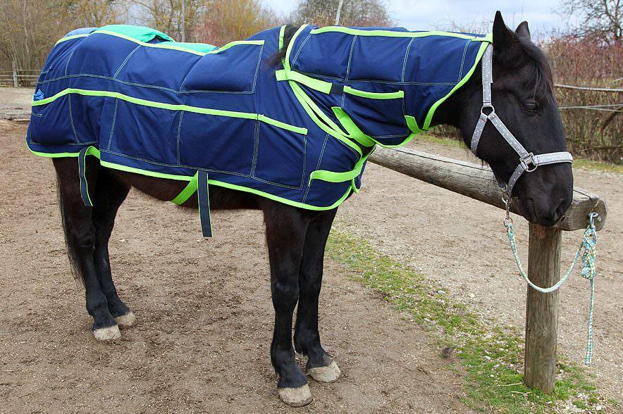 Pferd story mit Der leckende