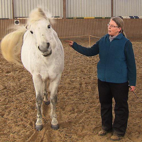 """Das """"JA und NEIN sagen"""" zählt zu den einfachen Zirkusübungen und kann mit jedem Pferd trainiert werden. Wie man beim Erarbeiten dieser Lektion vorgeht, erklärt dir unsere Expertin Christine Konrad."""