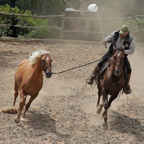 Ralf Heil ist als Trainer kurzfristig eingsprungen - etwa 6 Wochen nach Beginn des Events hat er einen der Mustang von einer anderen Trainerin übernommen.