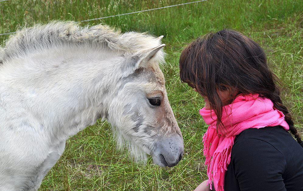 Frauen lieben Pferde - aber warum?