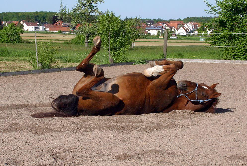 Futterumstellung bei kranken Pferden: Delantino