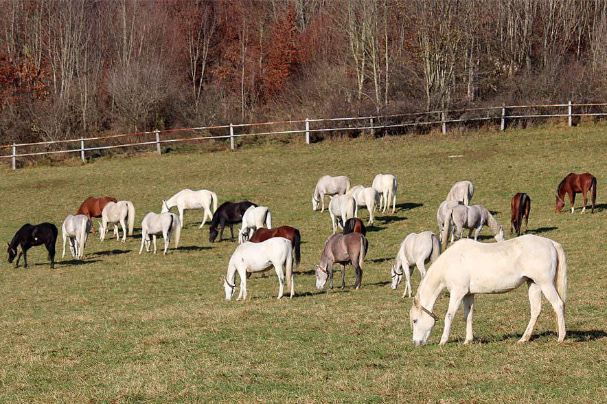 Futterumstellung im Herbst & Winter: In Marbach verbringen die Württemberger Warmblutpferde im Herbst noch den ganzen Tag auf der Koppel.