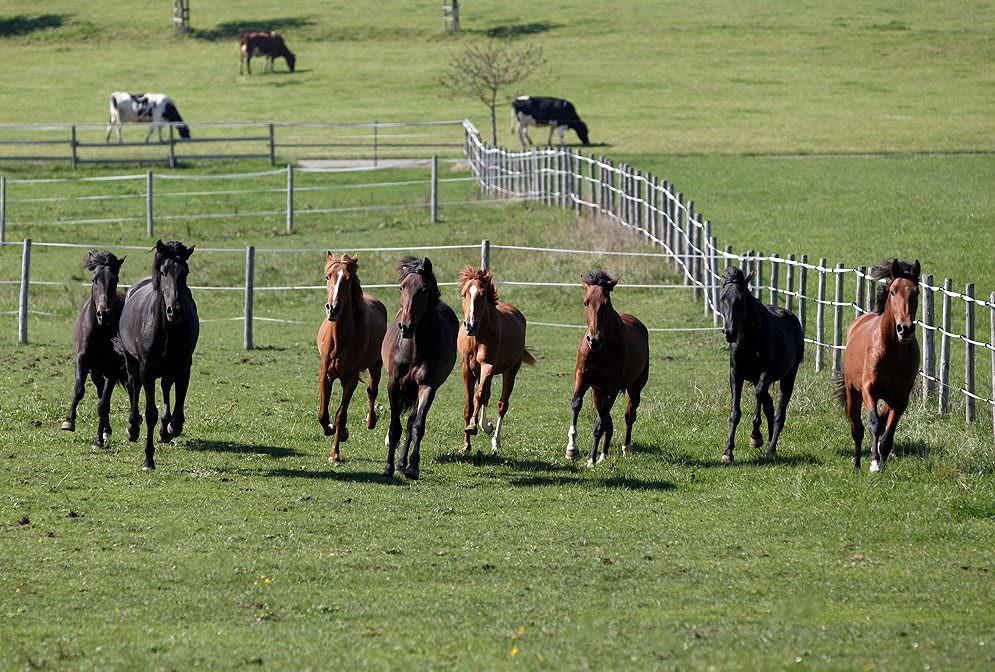 Fütterung: Junge und alte Pferde