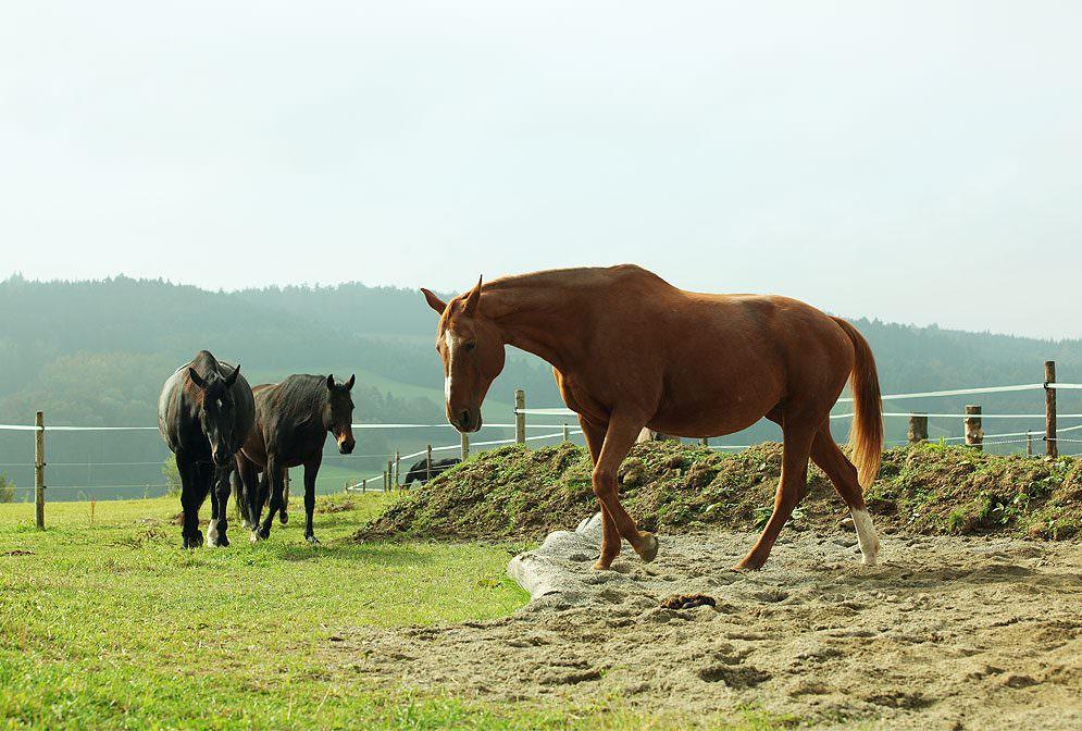Von den Wildpferden abgekupfert: Eine gesunde und naturnahe Pferdehaltung mit ganzheitlichem Ansatz – das ist der Paddock Trail.