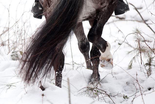 Der Hufschutz im Winter