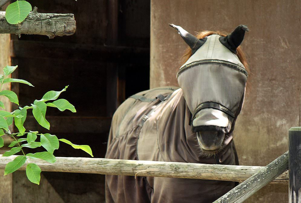Sommerekzem bei Pferden - Das sagen unsere Experten