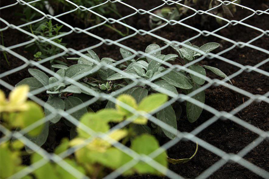 Der Zaun schützt vor zu starkem Verbiss.
