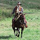 Quater Horse Zuechter