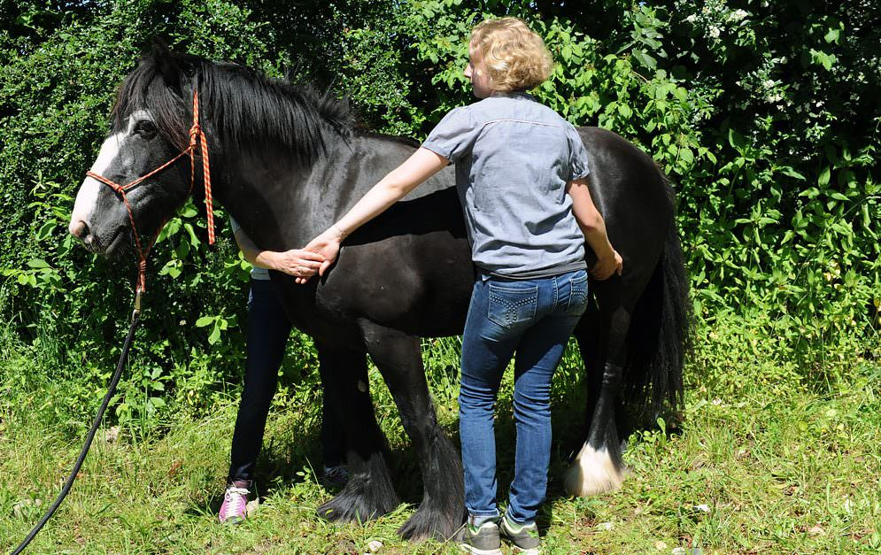 Heilströmen für Pferde: Körperströme und Sicherheitsenergieschlösser. © Tina von der Brüggen