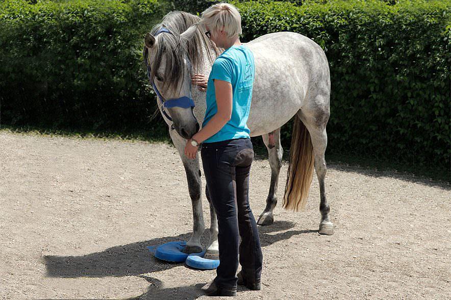 Egal welche Pferderasse oder in welchem Trainingszustand das Pferd ist - jedem Pferd können Balance Pads helfen.