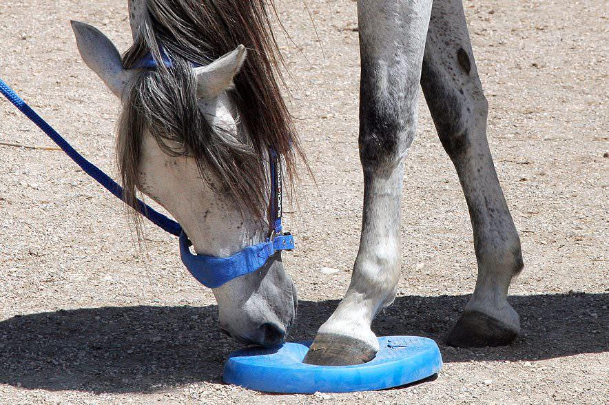 Je nach Härtegrad der Balance Pads sinkt das Pferd ein und trainiert sich dadurch selbst.