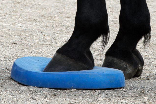 Balance Pads helfen dem Pferd, die Körperwahrnehmung zu schulen sowie Koordination und Gleichgewicht.