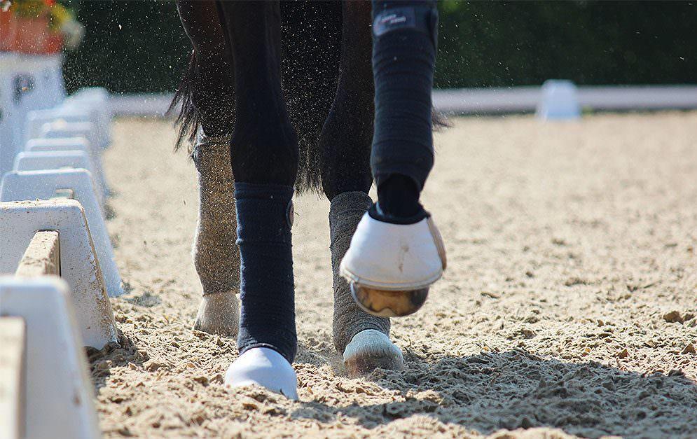 Unsere Serie zu den Gangarten der Pferde.
