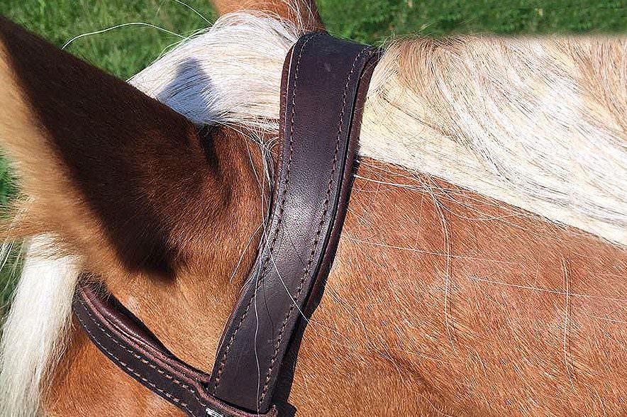 Das anatomisch geschnittene Genickstück passt sich gut ans Pferd an.