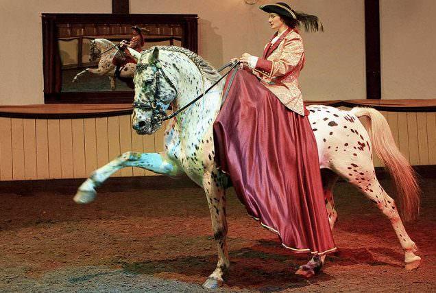 Diana Krischke von der Hofreitschule Bückeburg und Dressurreiterin Julia Ellsässer erklären, wie sie die Gerte am Pferd einsetzten.