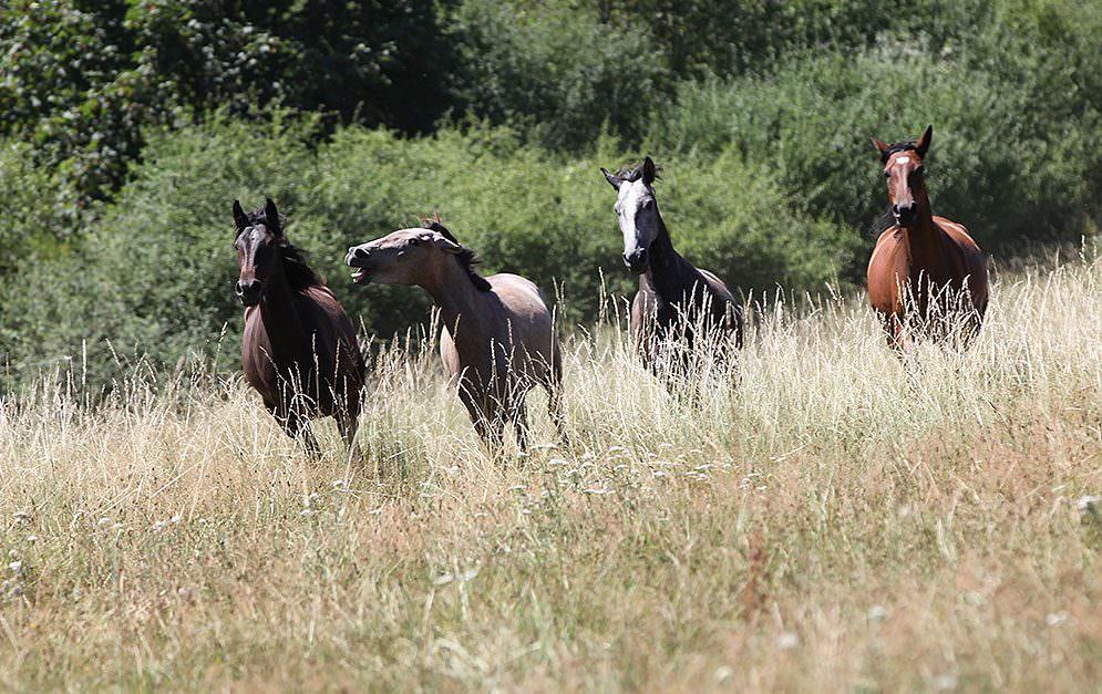 Michael Geitner erzählt dir, was er davon hält, wenn die Leute ihren Pferden keine Regeln vorgeben - nicht dass das Pferd noch sauer wird...