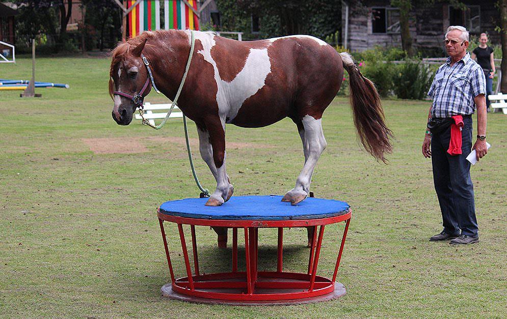 Eine erfolgreiche und harmonische Zusammenarbeit zwischen Mensch und Pferd erfordert eine gute Vertrauensbasis und die Motivation von Pferden.