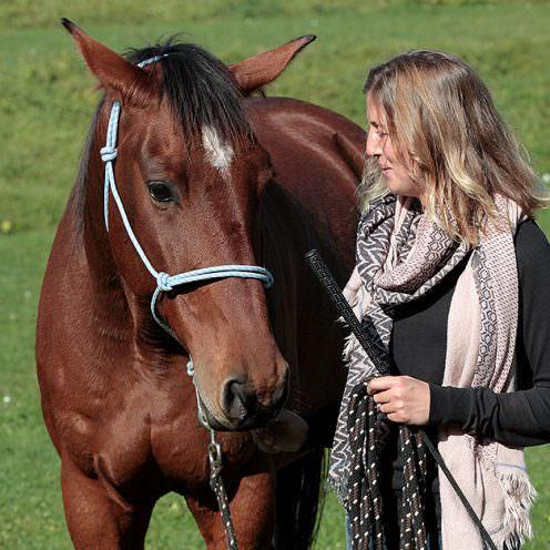 Was motiviert und was demotiviert Pferde? Und woran erkennt man das? Wir haben mit verschiedenen Experten darüber gesprochen.