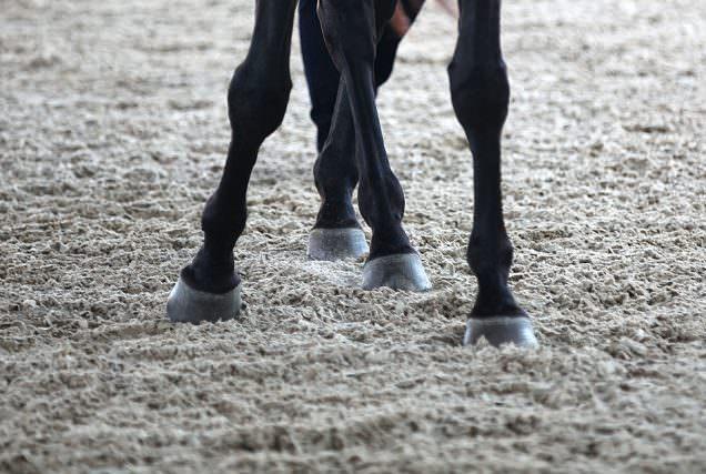 Das Schenkelweichen ist eine der Basisübungen, die das Pferd in die Arbeit auf zwei Hufschlägen einführt.