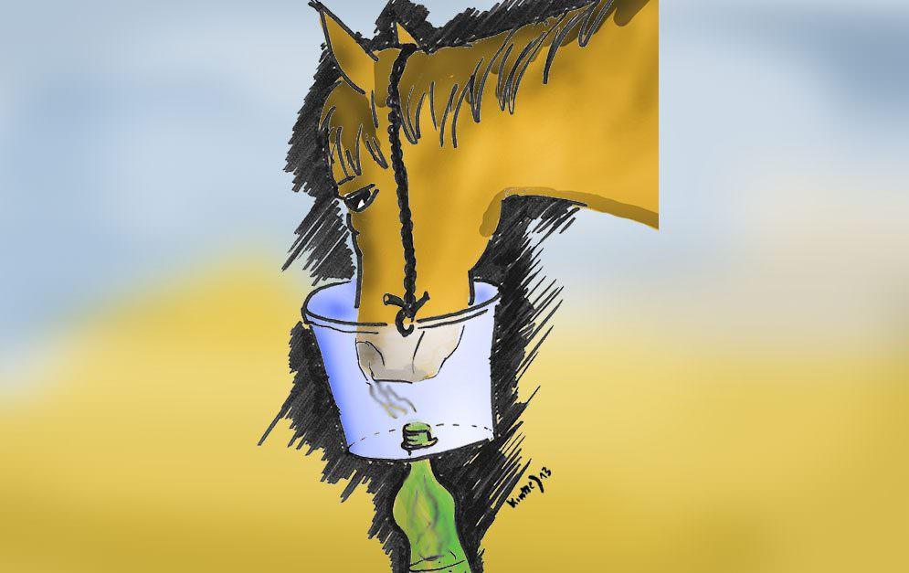 DIY: Dampfinhalator für's Pferd selber bauen