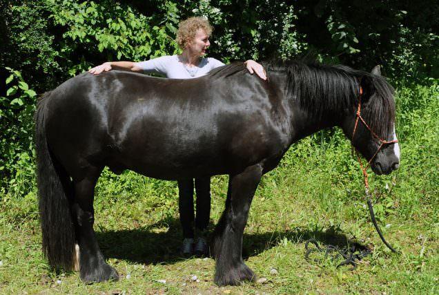 Heilströmen bei Pferden - Die geschichtliche Entwicklung. © Tina von der Brüggen
