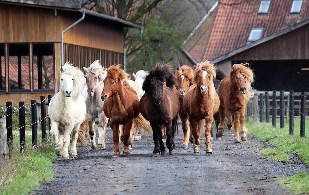 Impfungen von Pferden: Impfvoraussetzungen