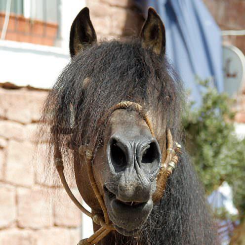 Eine stabile Partnerschaft baut vor allem darauf auf, wie gut man sein Gegenüber kennt. Wir helfen dir dabei, dein Pferd besser einzuschätzen.